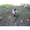 Different soil samples