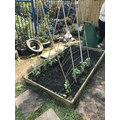 Gardening at school