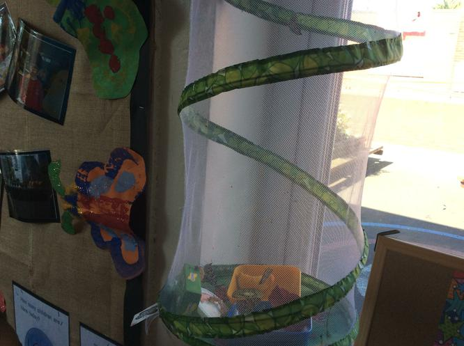 Our butterflies have hatched!