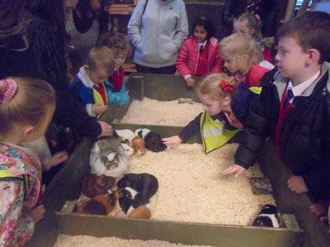 We enjoyed meeting the Guinea pigs.