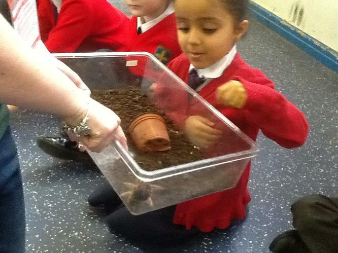 Fatema got to look at the tarantula.