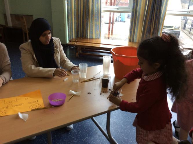 Fatema enjoyed planting sunflower seeds.