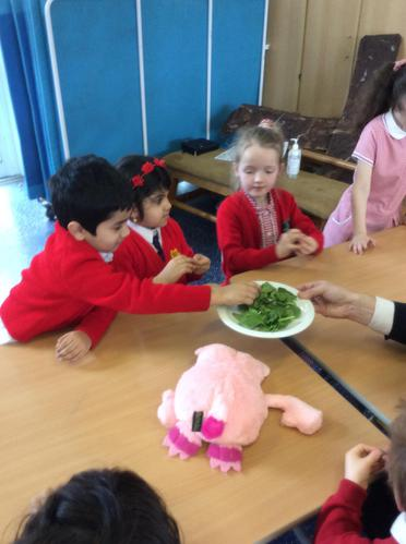 We ate spinach like Popeye!
