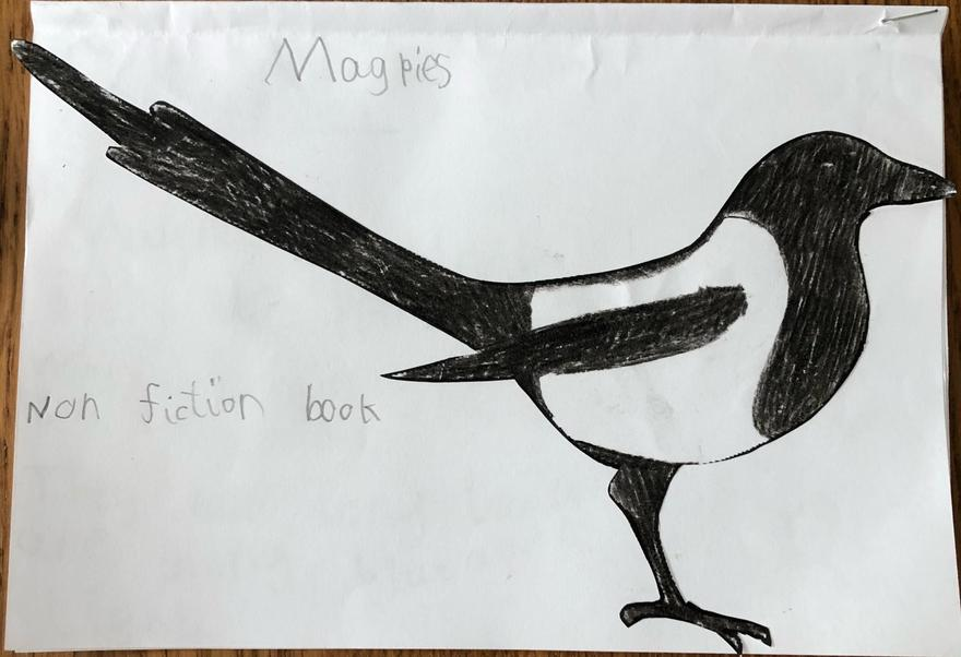 Leo's Magpie Fact Book Pg1