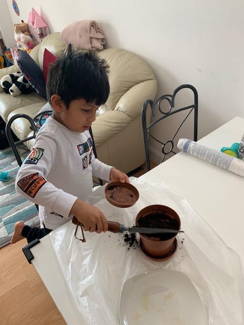 Mateo B planting tomato seeds