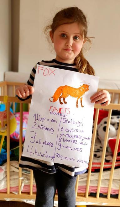Julia's fox facts