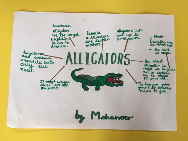 Mahanoor's alligator fact file.