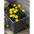 Planting the marigolds