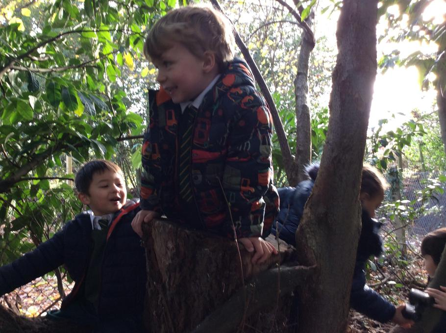 Forest School trees