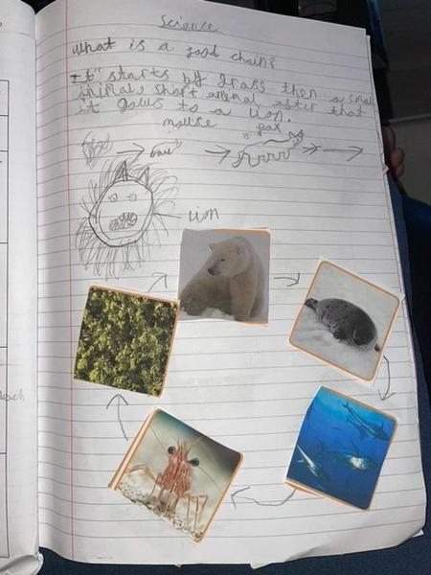 Mason B has created a great food chain.