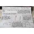 Esmae's detailed non-chronological report on teeth.