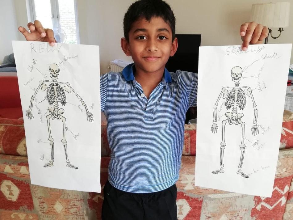 Cyrus Year 3 skeleton diagram