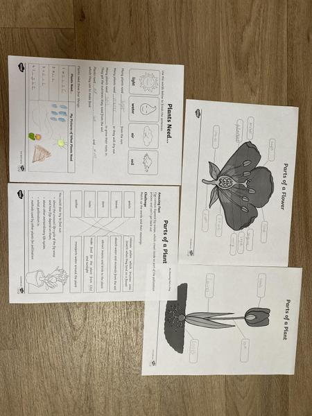 Mia Year 2 science learning