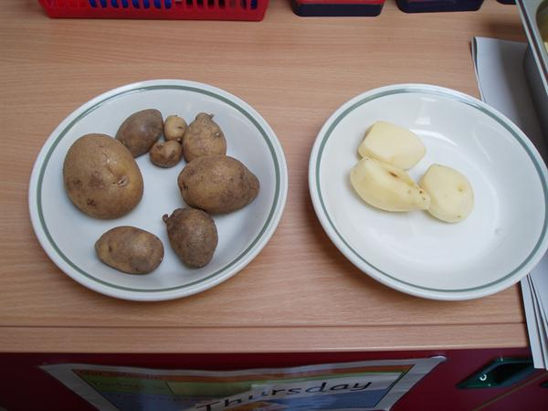 Potatoes from the garden & peeled potatoes