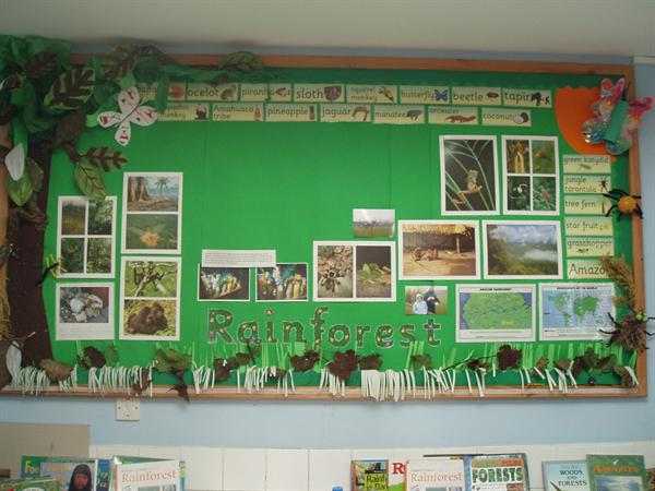 The Rainforest - Class 4