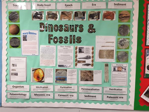 Dinosaurs and Fossils - Class 7