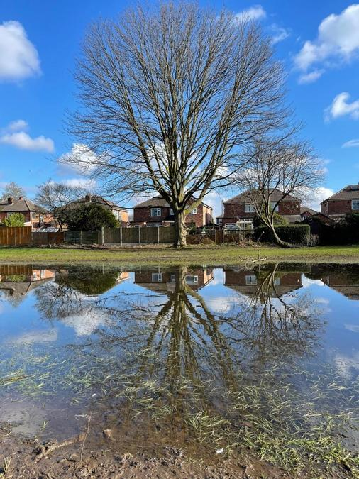 """""""Reflecting on where we see Science in Moor Nook Park"""" by Jane Y4"""