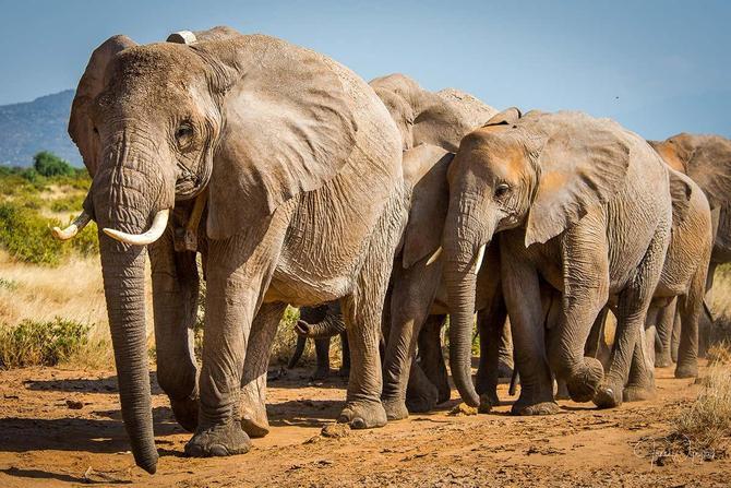 Miss Patmore loves elephants.