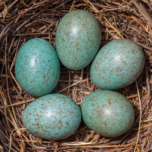 The eggs look like this
