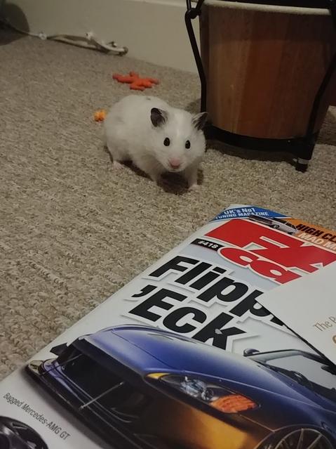 Hamster reading! :)