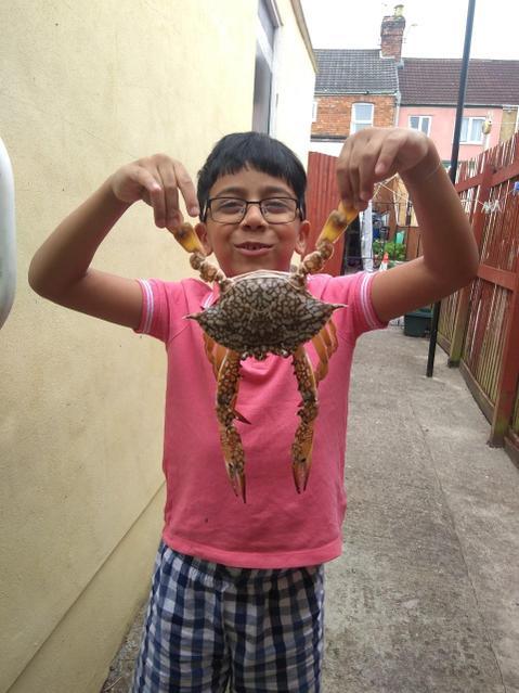 A big crab!