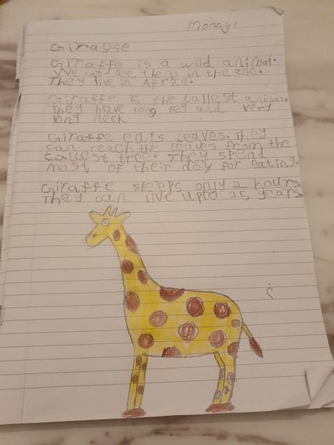 Non-chronological report about a giraffe