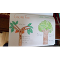 Fab tree drawings brought to life with colour!