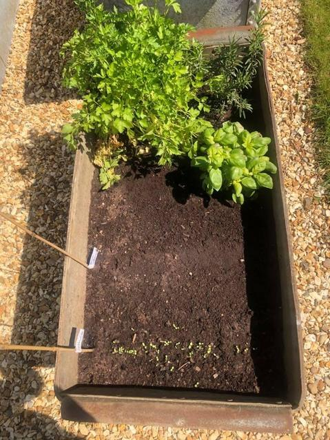 Miss Rofe's vegetable patch ready for the summer!