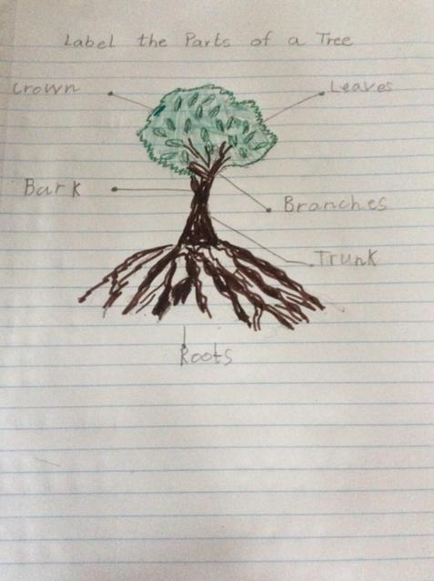 Labelling the parts of a tree.
