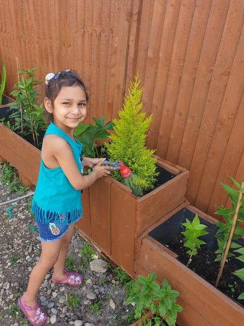 Caring for the plants in the garden