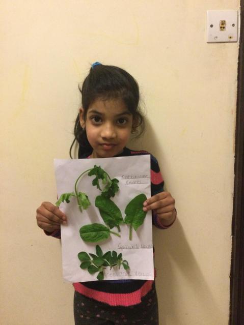 Identifying leaves for Science week!