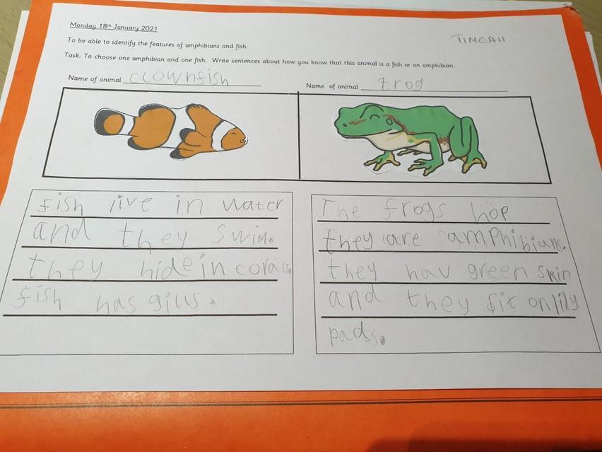 Super work on animals!