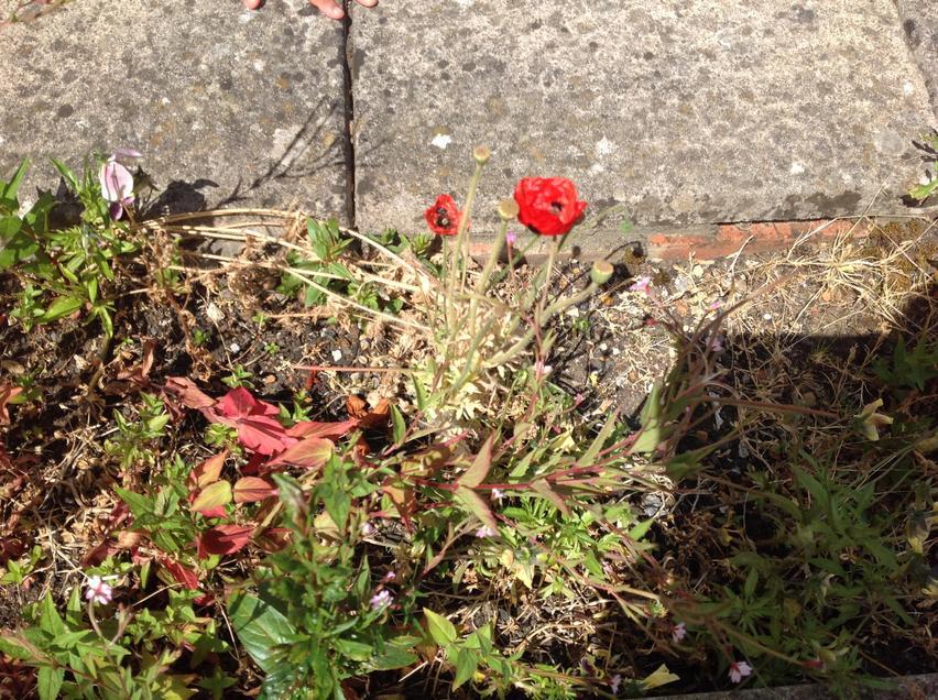 Wild flowers found at school.