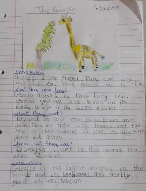 Non-Chronological report about giraffes.