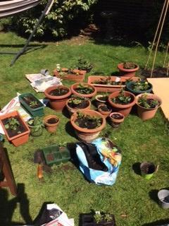 Mrs Kitchen was busy gardening in half term.