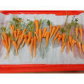 Carrots from our Forest School