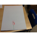 Remembrance Day poppy designs
