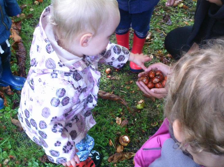 """How many conkers have we collected?"""