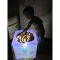 Put a torch inside a plastic box