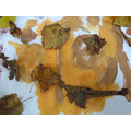 Oliver's special Autumn collage that he brought in to show us from home.