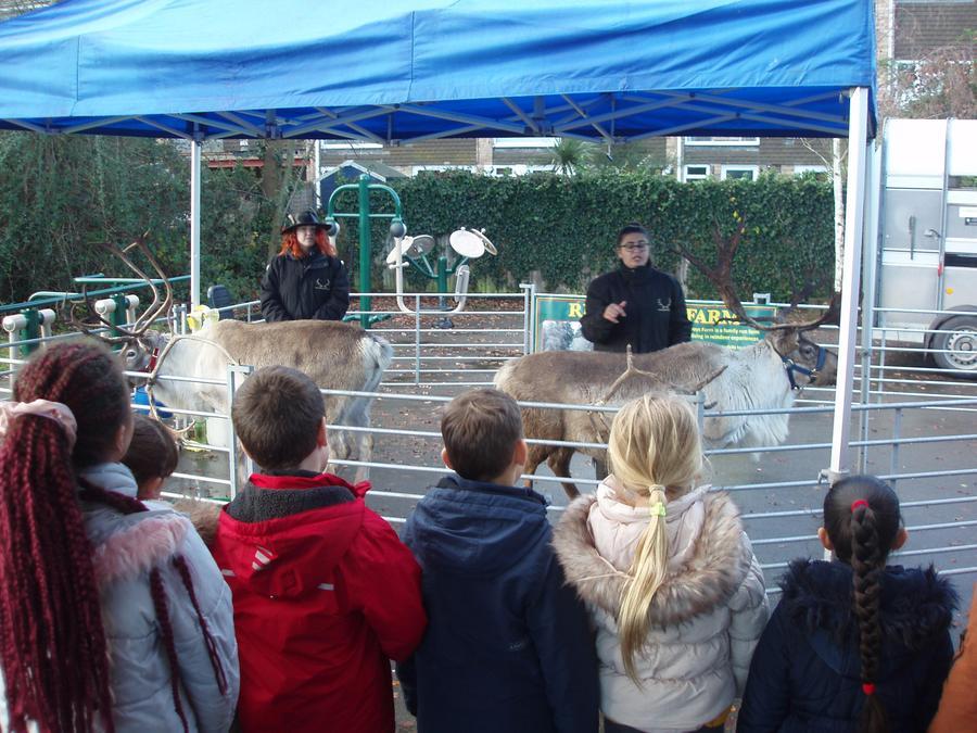 We loved meeting the reindeer again this year!