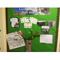 Our science display.