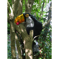 I SPY A TOUCAN IN THE TREE MADE BY HORIZON PUPILS