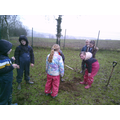 Planting trees in winter