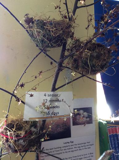 We have displayed our nests in a tree .