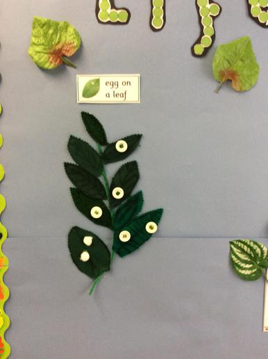 We have made some butterfly eggs.