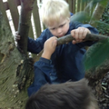 Understanding risk by climbing trees.