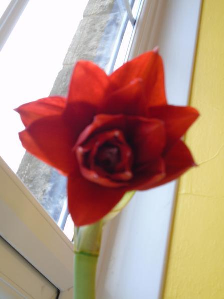 10.03.17  Hurrah! A flower at last!