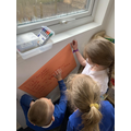 We used adjectives to describe what our animals looked like.