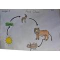 Huzayfaha's Food Chain